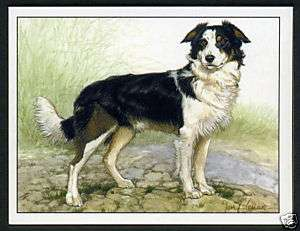 BORDER COLLIES   Dog Breed   Collectors Card Set of Six