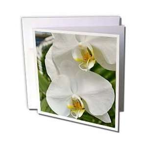 Patricia Sanders Flowers   white orchids   Greeting Cards