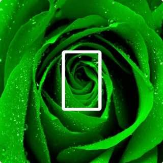 GREEN ROSE,GOTH,EMO LIGHT SWITCH COVER,STICKER,SKIN