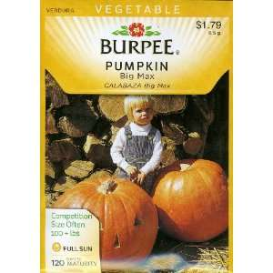Burpee 55855 Pumpkin Big Max Seed Packet Patio, Lawn