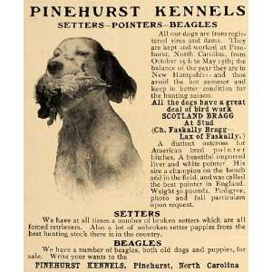 1906 Ad Pinehurst Kennel Setter Pointer Beagle Dog Hunt