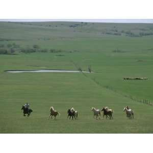 Rounding Up Horses to Use for a Cattle Branding